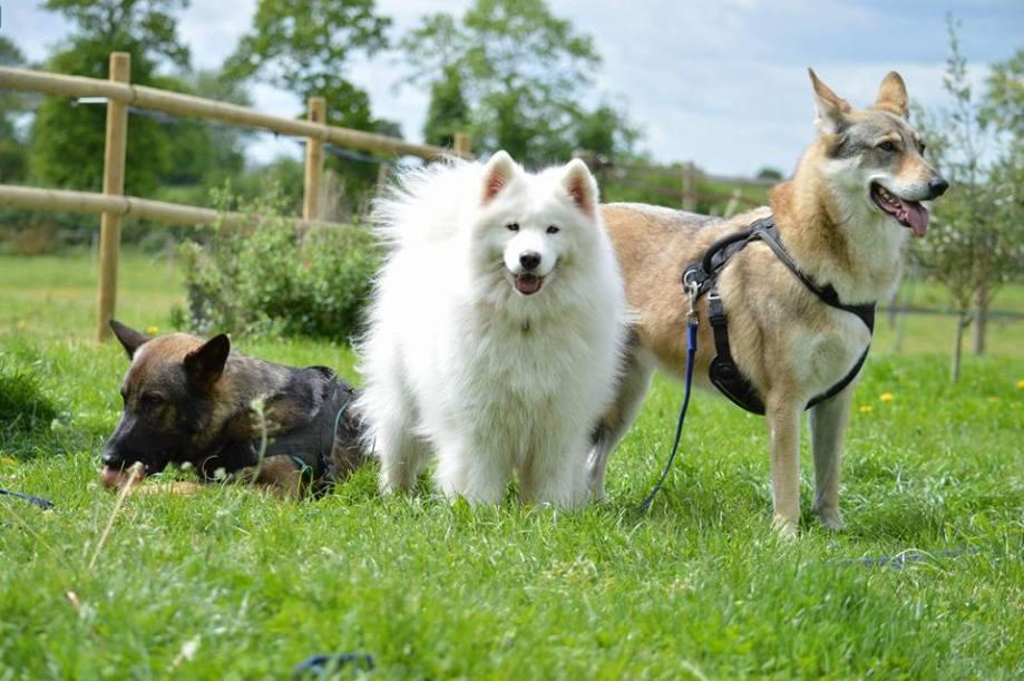 positif-dressage-pension-canine-chien-rennes-35