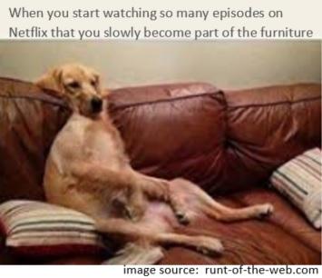 pic-NetflixDog