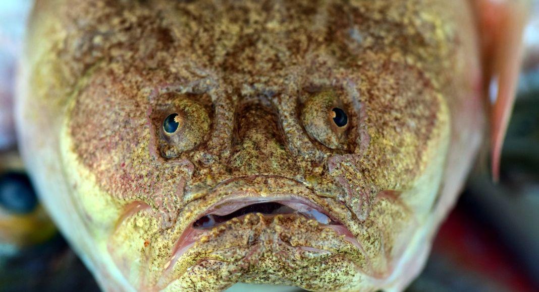 Giftiger Fisch
