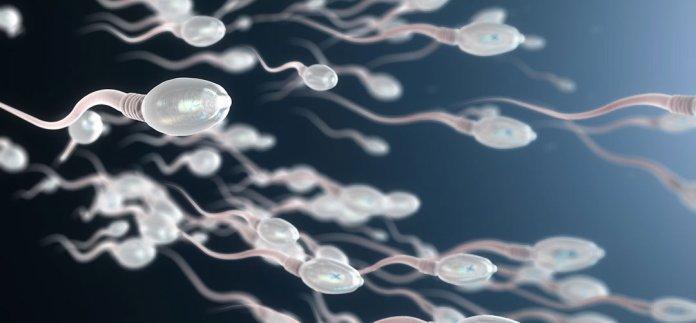 Viele Spermien