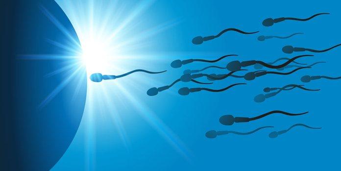 Spermien im Licht