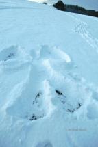 winter-schneeengel
