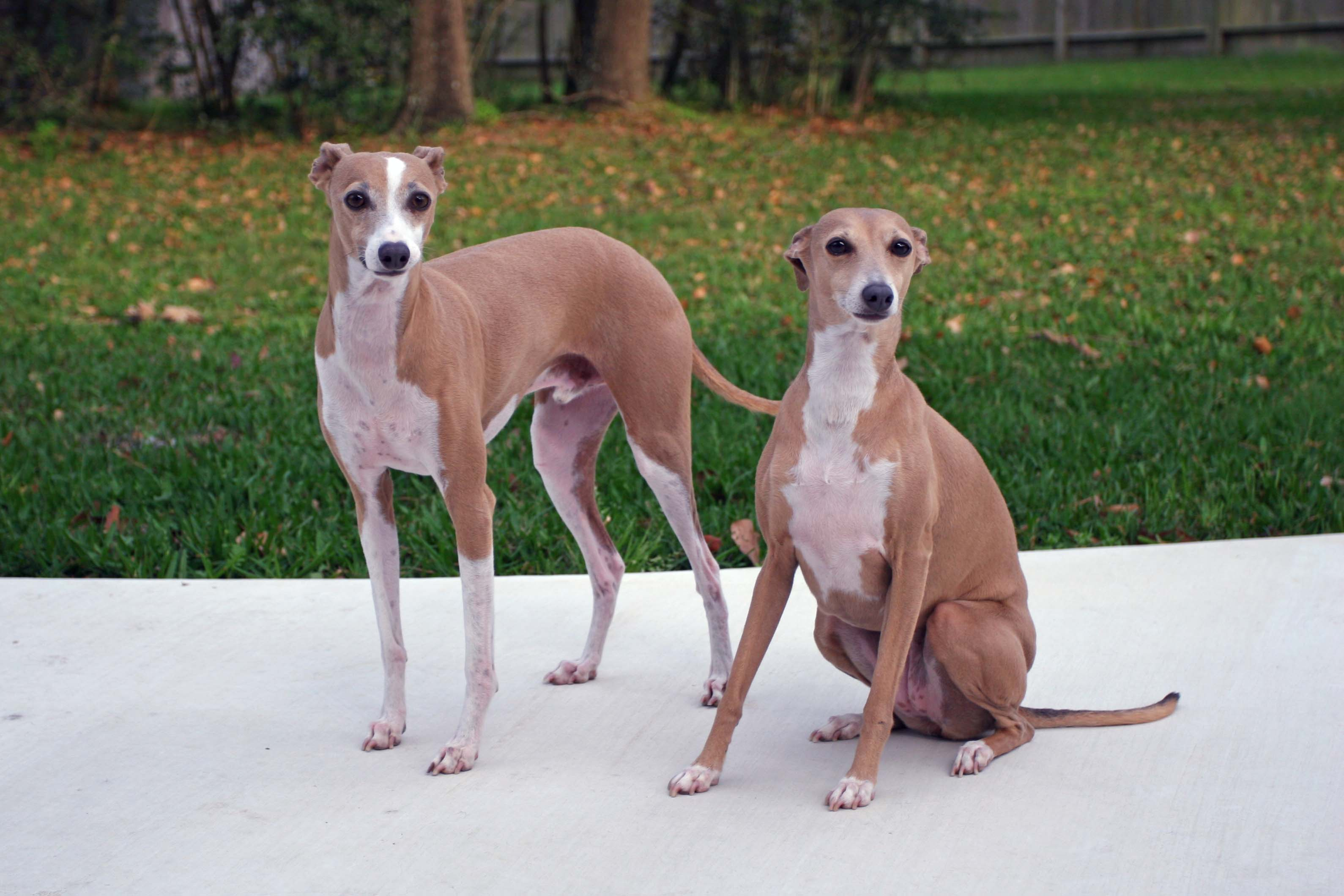 dogs-06-004.JPG