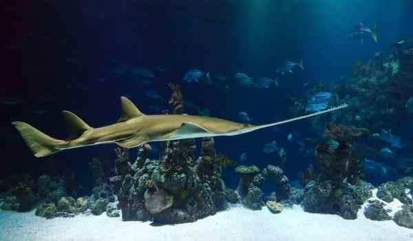 Remote access in grote aquaria - aquarium met haai