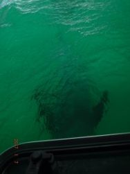 la-paz-dolphin-under-boat3