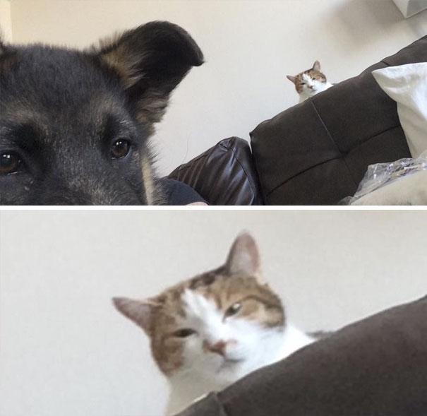 смешные фотографии собак и кошек, совместная жизнь собак и кошек