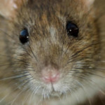 Profilbild von Tamara weyrauch