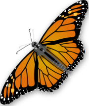 butterfly clip art 107718 free