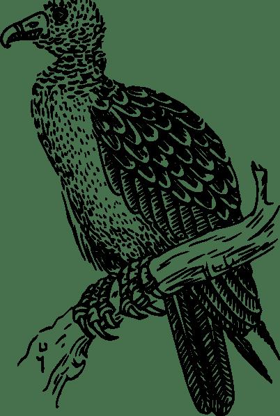 Buzzard clip art (118255) Free SVG Download / 4 Vector
