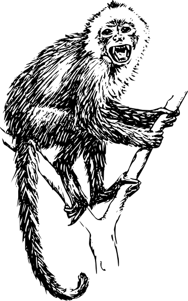 Capuchin Monkey clip art Free Vector / 4Vector