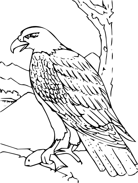 coloring book bald eagle clip art free vector / 4vector