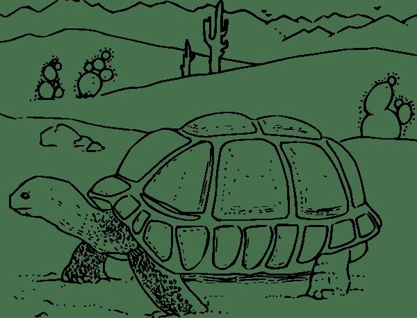 Coloring Book Desert Tortoise clip art Free Vector / 4Vector