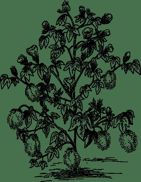 Cotton Plant clip art (108045) Free SVG Download / 4Vector