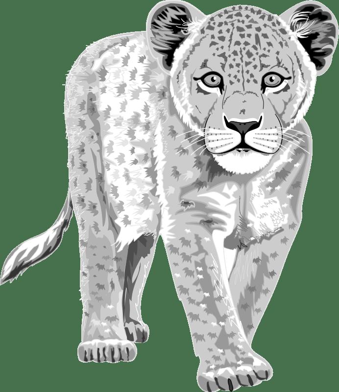 Leopard Free Vector  4Vector