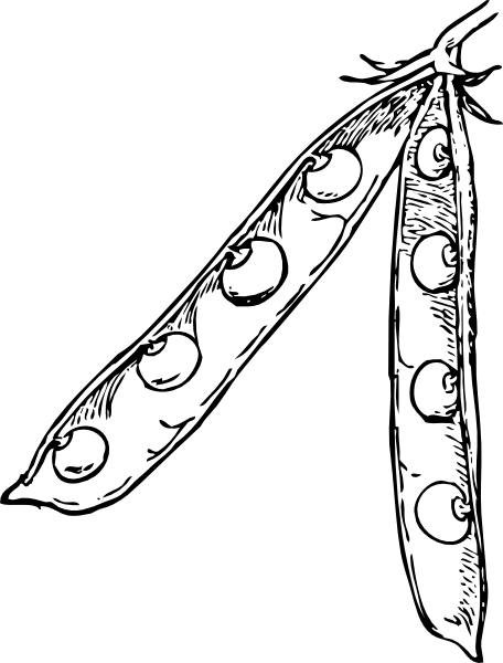 Free lima bean life cycle coloring pages