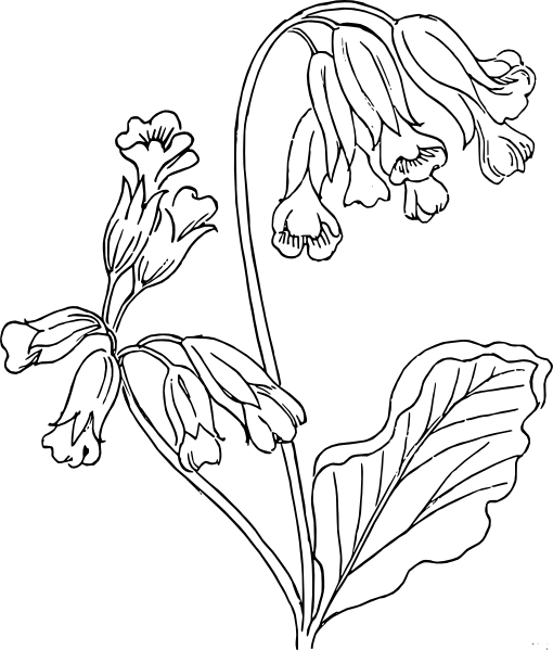 Rose Outline clip art (114569) Free SVG Download / 4Vector
