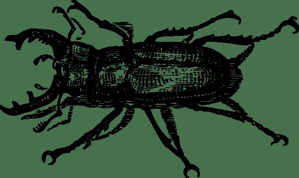 Staghorn Beetle clip art Free Vector / 4Vector
