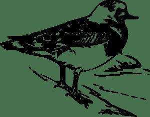 Walking Bird Animal clip art (119181) Free SVG Download