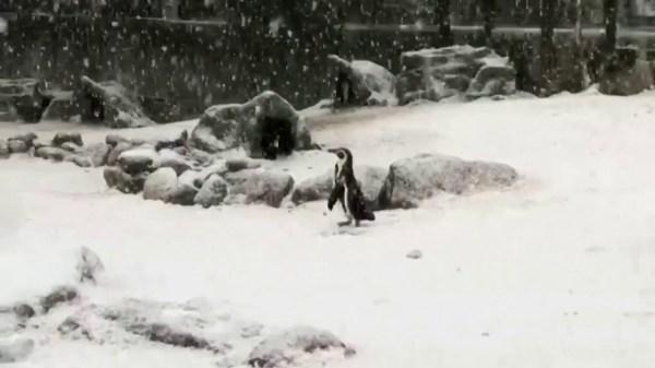 London Zoo's animals get a taste of winter