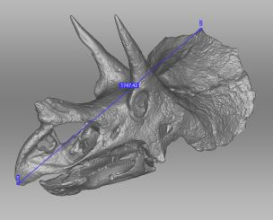 3D-model of a Triceratops Prorsus skull formerly known as a Brevicornus it is scanned in the Peabody museum