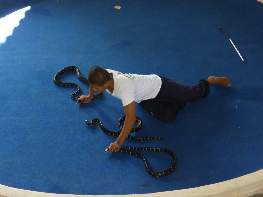 Snake charmer with three snakes at Krabi Cobra show