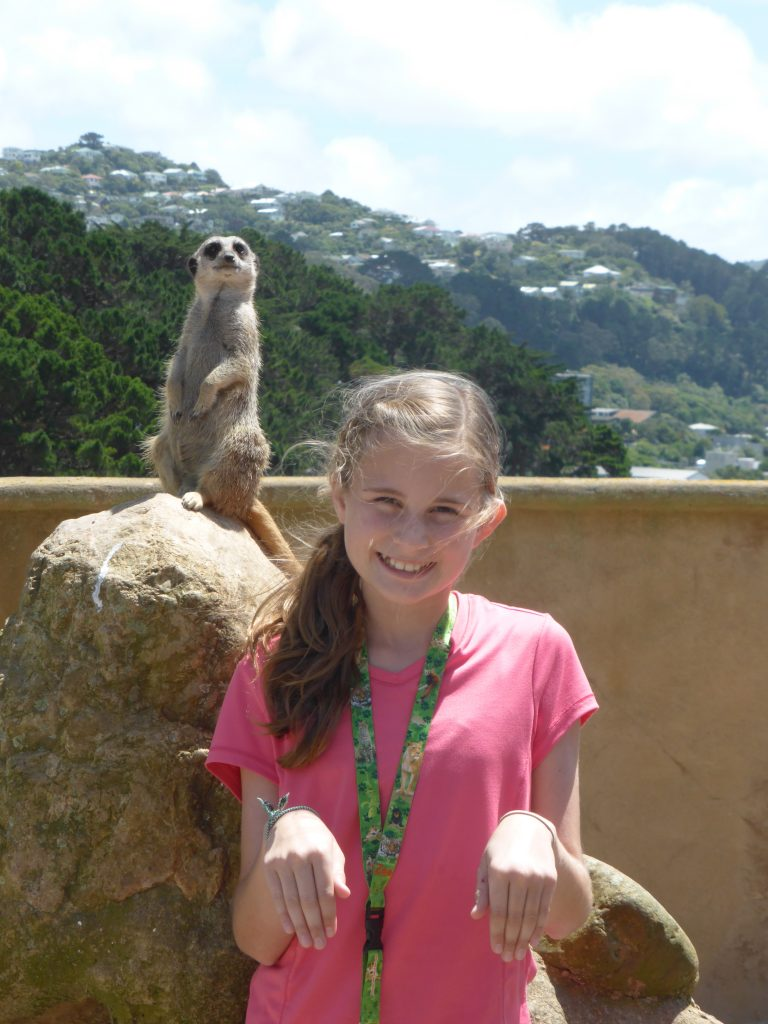 Mobbed by Meerkats at the Wellington Zoo