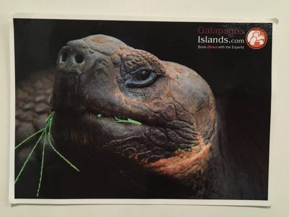 Postcard of tortoise left in barrel at Post Office Bay, Floreana Island, Galapagos