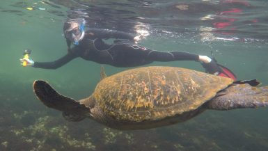 Los Tuneles Galapagos sea turtle family trip