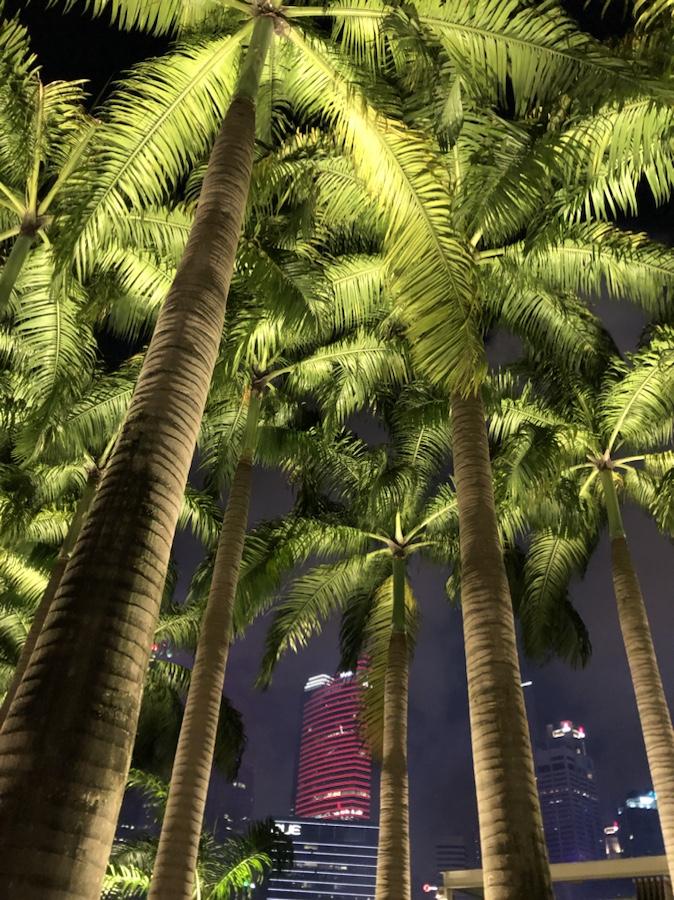 Palm trees at Marina Bay at night