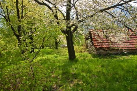 Напуштена колиба на Врању