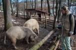 Farma porodice Milanović