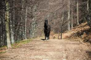 Wild horses can be found everywhere in Beljanica
