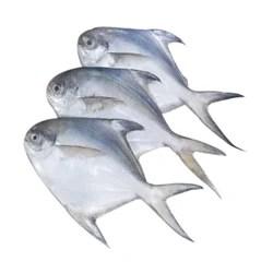 Pomfret Fish Manufacturers OEM Manufacturer in India