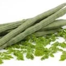 Green Gujarat Fresh Drum Stick