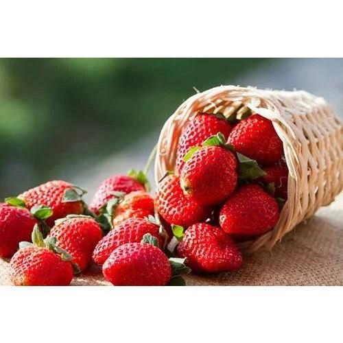 Fresh Strawberry At Rs 40 Kilogram स्ट्रॉबेरी Farm
