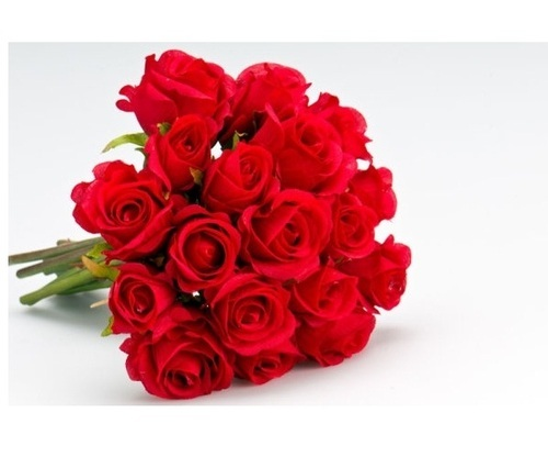 natural flowers rose flower