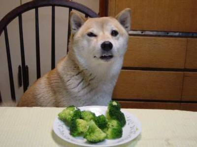Were you even listening when I said I didnt like broccoli?  You insult me.