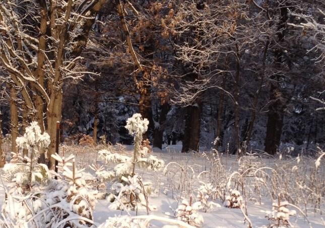 Frosty snow!