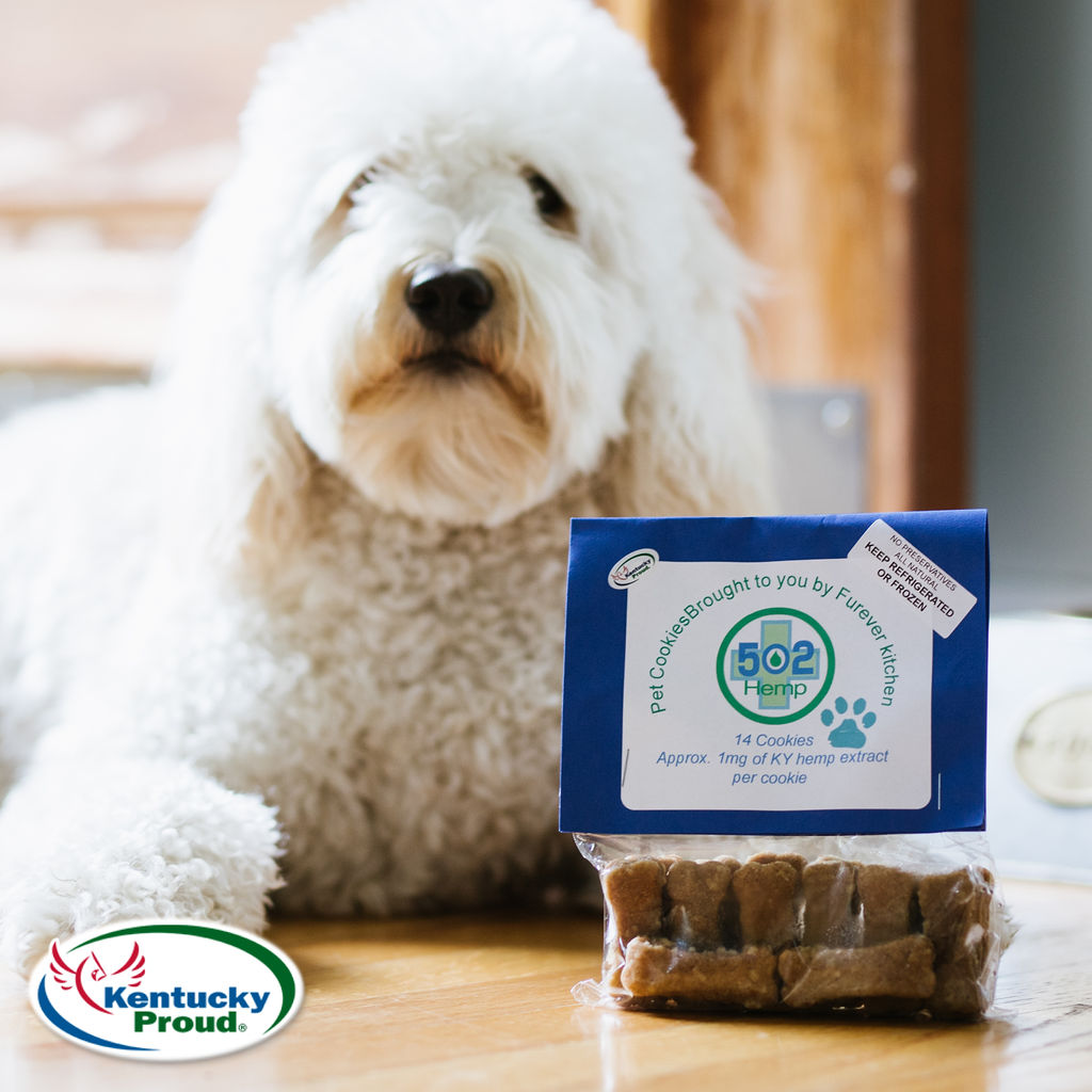 Are CBD Dog Treats Good for Dogs?