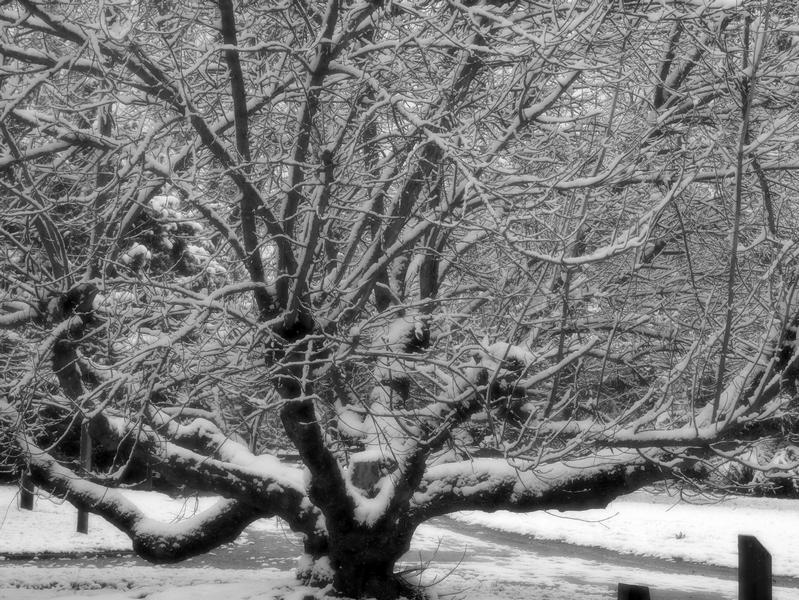 lundi soleil 2020 blanc janvier