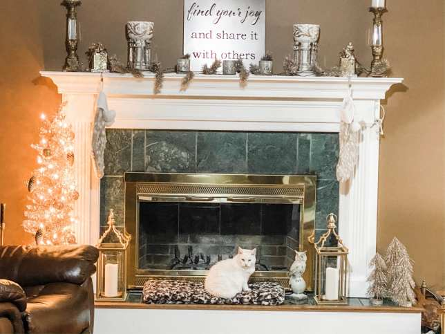 White cat in front of firepalce