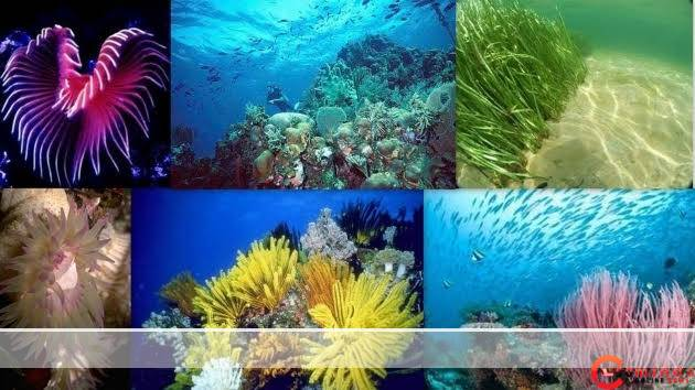 85% of all plants live in the ocean - images 45 - How 85% of all plants live in the ocean
