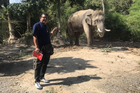 retired person, 80, camping in the woods stomped on to death by hungry elephant in thailand - c1 1384034 700 300x200 - Retired person, 80, camping in the woods stomped on to death by hungry elephant in Thailand retired person, 80, camping in the woods stomped on to death by hungry elephant in thailand - c1 1384034 700 - Retired person, 80, camping in the woods stomped on to death by hungry elephant in Thailand