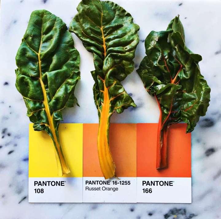 Bộ ảnh: Màu Pantone và Đồ ăn, tại sao không? | 50mm Vietnam
