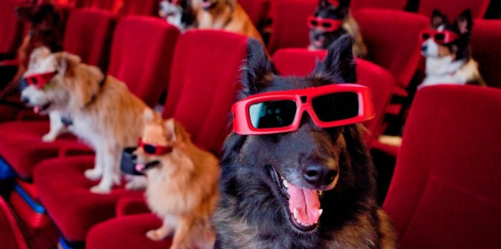 K9 cinemas, dog friendly theater, 50plus