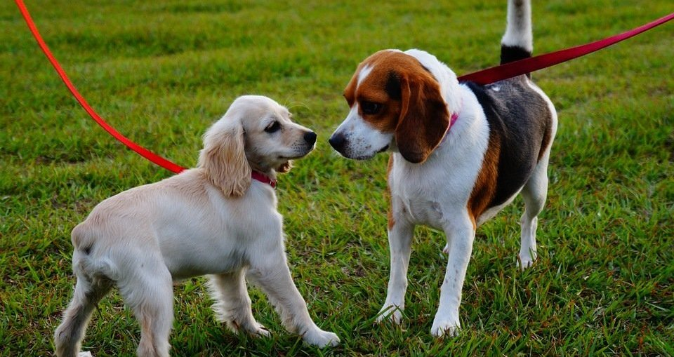best dog parks dallas