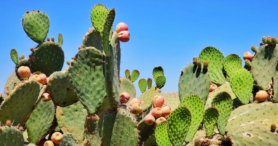 remove cactus spikes from skin