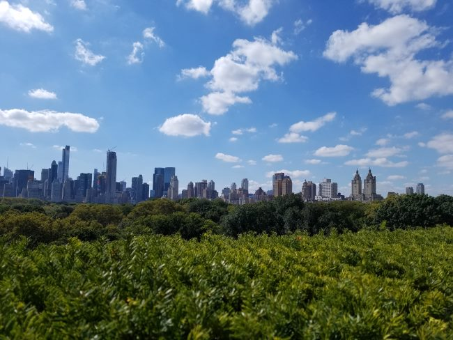 Include Central Park in your 50 hours