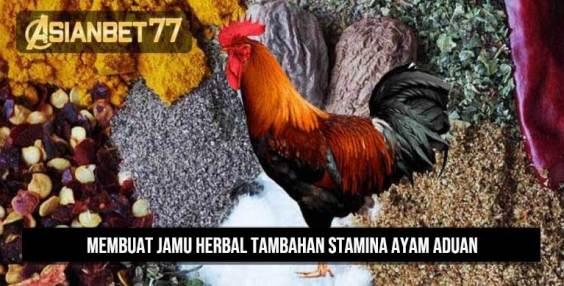 Membuat Jamu Herbal Tambahan Stamina Ayam Aduan