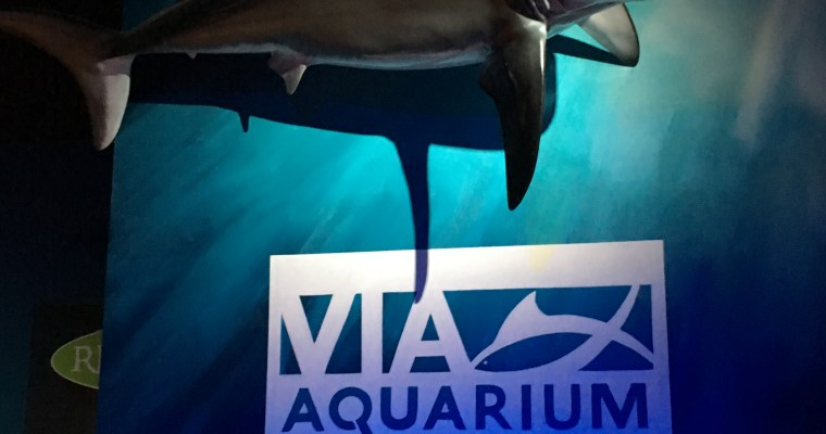REVIEW: VIA Aquarium, Schenectady [PHOTOS]